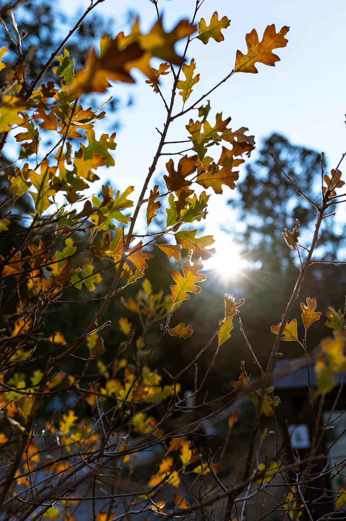 Foliage at Mt. Charleston